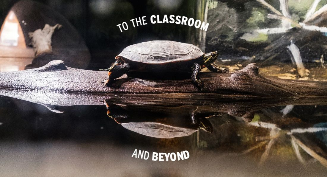 To the Classroom and Beyond